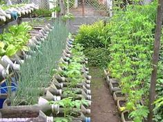 Risers in container gardening - Save space by putting container garden on shelves. See examples of how to build in this youtube video from the Phillipines.
