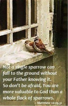 Not a single sparrow can fall to the ground without your Father knowing it. So don't be afraid, you are more valuable to God than a whole flock of sparrows. THANK YOU LORD! Scripture Verses, Bible Scriptures, Scripture Pictures, Bible Quotes, Matthew 10 29, God Is Good, You Are The Father, Bird Art, Belle Photo