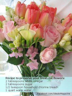 Flower preservative recipe