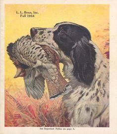 English Setter, Casey had a beautiful voice that sounded like a violin!
