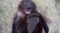 Man playing with Grizzly Bear