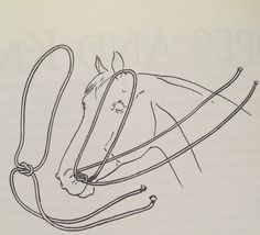Here is one way to make emergency reins; this is also called a war bridle.