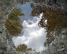 Reflection1 - I took this photo of a mud puddle in my gravel driveway.  Reflection of life in a mud puddle