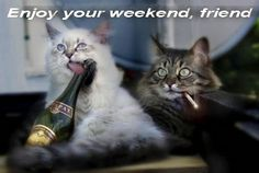 Enjoy Your Weekend, Happy Weekend, Weekend Humor, Cute Pictures, Funny, Animals, Instagram, Quotes, Om