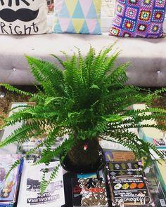 Miguel Niña Bonita 2 h · Editado ·  Ver en Instagram #laniñabonita #photography #rincones #detalles #piensaenverde #kokedama #decor #jardineria #naturaleza #interiordesign @nanakokedamas #madrid #gijon #cimavilla #kokedamas #regalaplantas