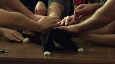 The most satisfying cat GIF, PART 1. | The 15 Most Delightful GIFs Of 2013