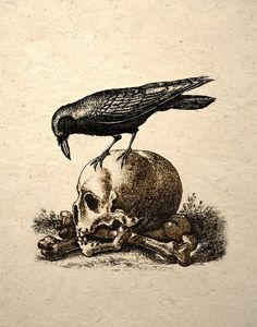 Crow On A Skull Gothic Macabre Art Print Medieval Memento Mori. $14.00, via Etsy.