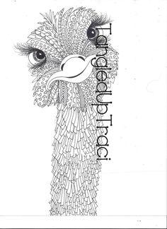 Résultats de recherche d'images pour «autruches illustration»