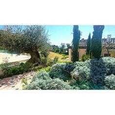Waiting Springtime #gardening #jpdesigner #design #garden #fashion #Marbella #gardener #Luxury #luxurylife #architecture #plants #green #olivetree #designer