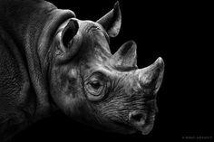 La elegancia de ser uno de los animales más fuertes del reino animal.