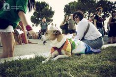 THESSALONIKI PARADE 2013 #dog