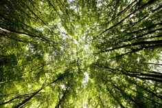 Image result for tree canopy