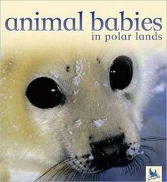 Crías de animales en los polos. Texto en inglés. Editado por Kingfhiser. *En nuestra biblioteca.