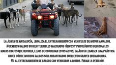 We want the Andalusian does not authorize the motor training greyhounds. Queremos que la Junta de Andalucía no autorice el entrenamiento de galgos a motor. http://www.change.org/petitions/queremos-que-la-junta-de-andaluc%C3%ADa-no-autorice-el-entrenamiento-de-galgos-a-motor?utm_campaign=action_box_medium=twitter_source=share_petition#