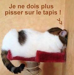 Jaba, I Love Cats, Cute Animals, Kitty, Lol, Pets, Funny, Copyright, Board