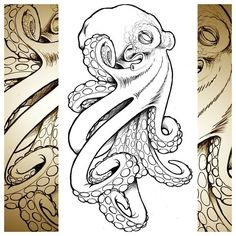 octopus and nautical star illustration | octopus sketch octopus # drawing #…