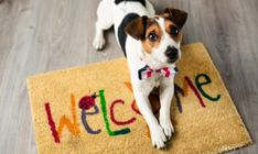 Looking for a place to go with man's best friend? We've compiled a list of spot in Cincinnati that welcome you with your dog. Pet Friendly Apartments, Dog Poses, Cat Boarding, Find Pets, Jack Russell Terrier, New Puppy, Shelter Dogs, Animal Shelter, Puppies For Sale