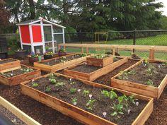 Keeping Chickens, Vegetable Garden Design, Natural Garden, Farmer, Backyard, Gardening, Vegetables, Castles, Envy