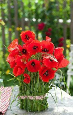 Flowers and Gardens All Flowers, Amazing Flowers, Pretty Flowers, Beautiful Flower Arrangements, Floral Arrangements, Deco Nature, Beautiful Flowers Wallpapers, Flower Wallpaper, Red Poppies