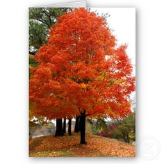 beautiful fall pictures - Google Search