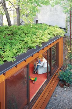 Storage container home with ferns on top (and just about everywhere else)