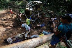 Ka'apor men use sticks to hit loggers