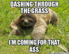 Sloths are so creepy xD