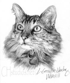 Say hello to Payton the kitty! This was a cat pet portrait commission done on an 11 × 14 (80lb 400 series med. Strathmore drawing paper) with graphite pencil. Created exclusively by Linda Costello Hinchey of CH Fine Arts Studios at www.chstudios.net
