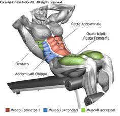 mappa-muscoli-addominali-situp-panca-bassa.jpg (390×380)