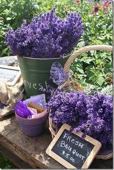 Fresh Cut Lavender - Sequim, Washington Lavender Festival by yolanda Lavender Cottage, Lavender Garden, French Lavender, Lavender Blue, Lavender Fields, Lavender Flowers, Purple Flowers, Beautiful Flowers, Lavender Bouquet