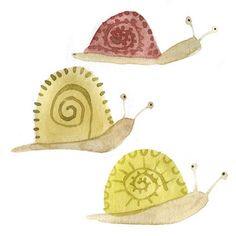 Snail race in my garden....for the petunias....of course.