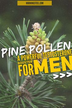 Pine Pollen Testosterone - 5 ways this herb jacks up your man juice Testosterone Boosting Foods, Natural Testosterone, Testosterone Booster, Increase Testosterone Naturally, Testosterone Production, Body Building Tips, Anabolic Steroid, Bodybuilding Diet, Your Man