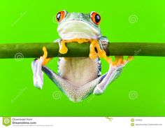 frogs jumping - Google Search