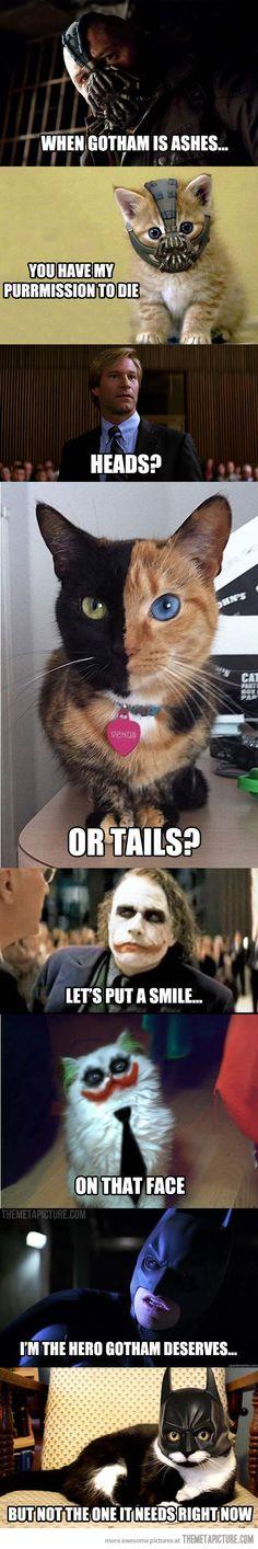 Cats finish famous quotes… lol joker cat
