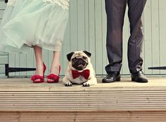 Wedding Pug (love the bride's red shoes and the pug's matching red bowtie! Wedding Humor, Wedding Blog, Wedding Styles, Dream Wedding, Pug Wedding, Wedding Ideas, Trendy Wedding, Wedding Planning, Dogs In Wedding