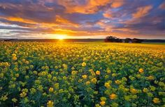 Amazing Photos from Around the Net: Valley with colourful flowers