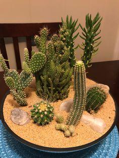 Plantas ❤️❤️❤️❤️❤️ Mini Cactus Garden, Cactus House Plants, Succulent Gardening, Garden Terrarium, Succulent Terrarium, Succulents In Containers, Cacti And Succulents, Planting Succulents, Planting Flowers