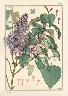 Lilac  Eugene Grasset Pochoir Prints 1896