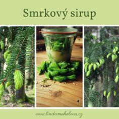 Kopřiva dvoudomá Pickles, Cucumber, Herbs, Nature, Plants, Recipes, Food, Syrup, Alcohol