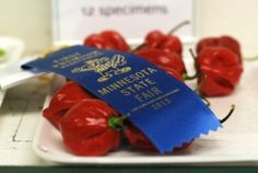 Blue Ribbon Habaneros at the MN State Fair  from One tomato, two tomato.