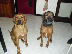 Bamfi & Kai
