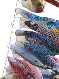 In Japan there is a custom in spring to put up carp streamers in order to wish for children's growth, April-May    #carp #streamers #carpstreamers