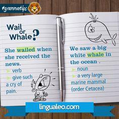 WAIL or WHALE?