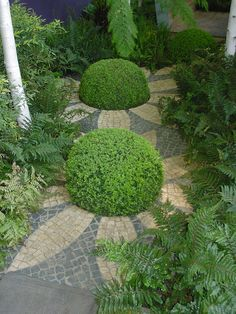 Boxwood Flowers on a stone cobble path.