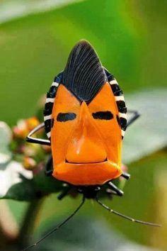 A weird bug