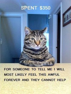 Best of Cat Shaming. cats admit to horrible things. Years ago our cat DID eat my daughters hamster! Cat Shaming, I Love Cats, Crazy Cats, Hate Cats, Silly Cats, Stupid Cat, Funny Kitties, Grumpy Cats, Funny Cute