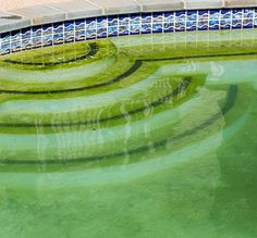 There Will Be Algae: How To Beat It