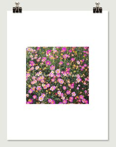 Pink Flowers Modern Pop Photo by SmokestackPhotomat, $10.00