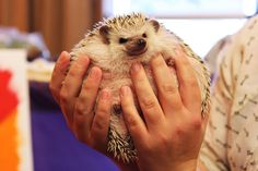 Hedgehogs are happiness.