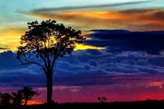 colorfull sky and a large lonly tree